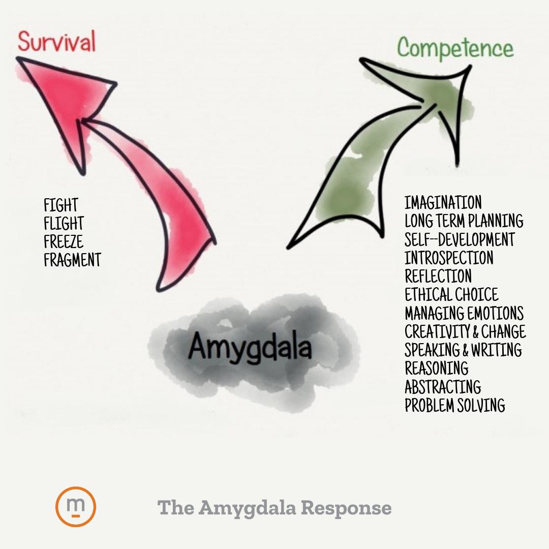 Amygdala Response