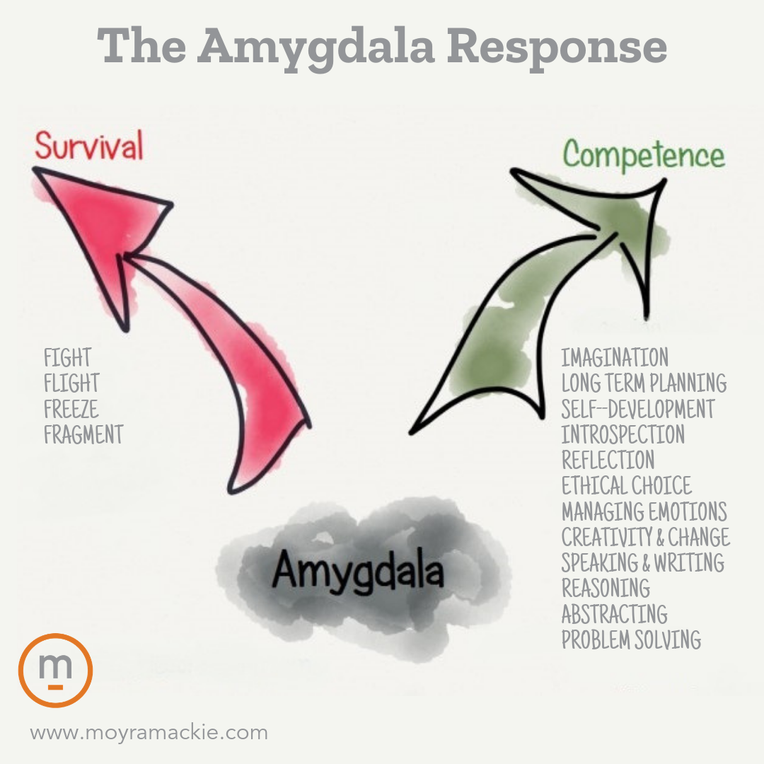Moyra Mackie   Coach   Coaching   Amygdala